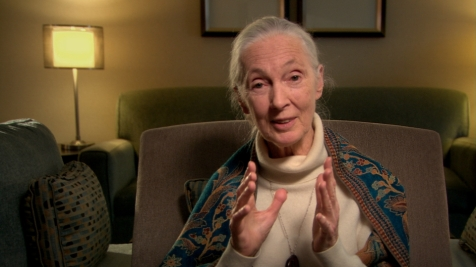Surviving Progress - Jane Goodall