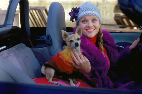 Legally Blonde - Elle & Bruiser Woods