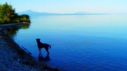 Goodbye to Language - Dog