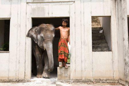 When Elephants Were Young - Nong Mai, Wok
